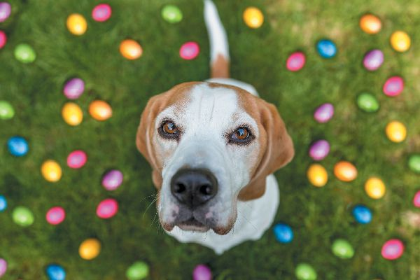 A dog surrounded by Easter eggs.