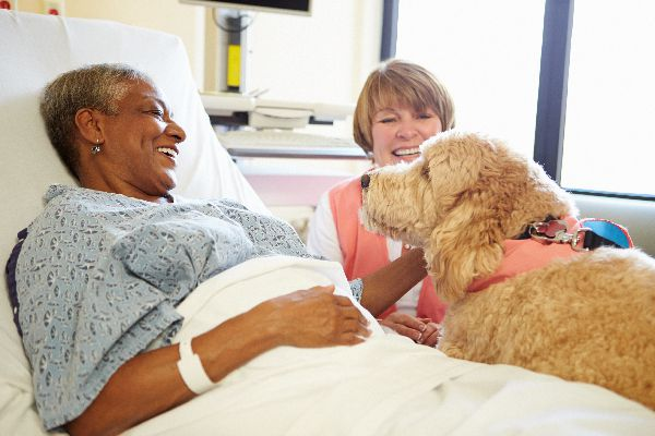 A therapy or emotional support dog in a hospital.