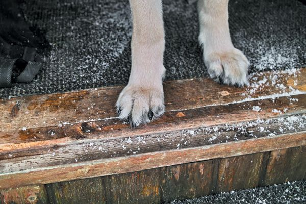 Dog paws about to step out into snow.
