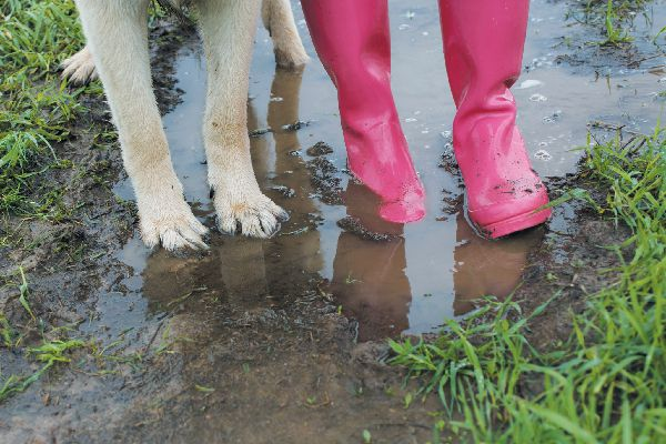 Dog paws and human rain boots in mud.