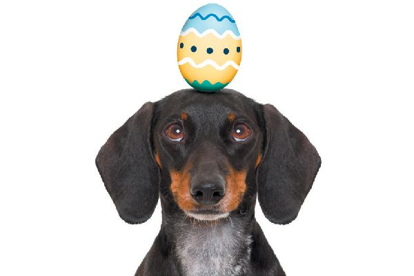 Dog with an Easter egg on his head.