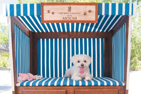 Mochi lounges on the beach in her very own cabana, where she got to eat, drink and bark at lizards.
