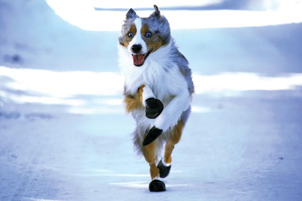 PawZ dog boots.