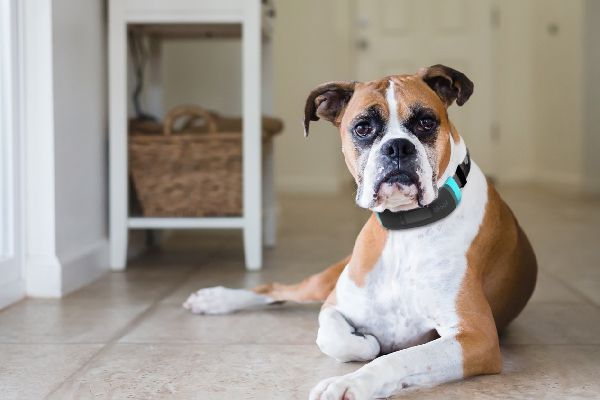 Wagz is a smart collar that tracks a few different things about your dog.