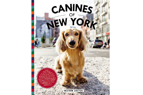 Canines of New York.