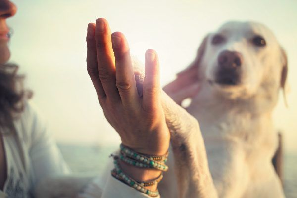 A dog and woman high fiving.