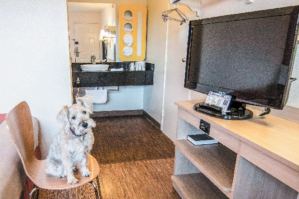 Motel 6 is a dog-friendly hotel chain.