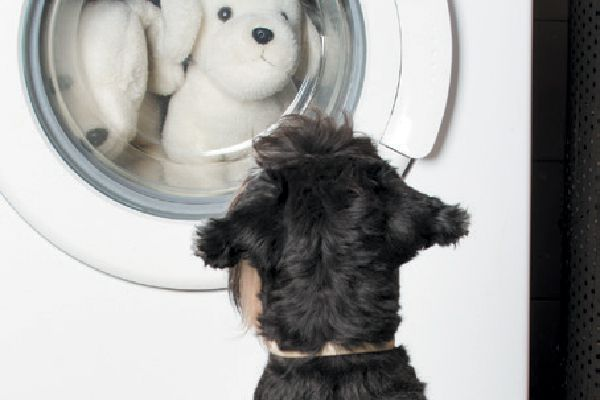 A dog watching his toys getting cleaned.