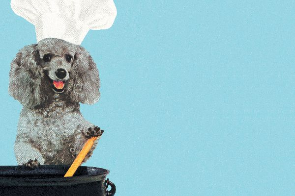 Vintage photo of dog cooking with a chef's hat on.