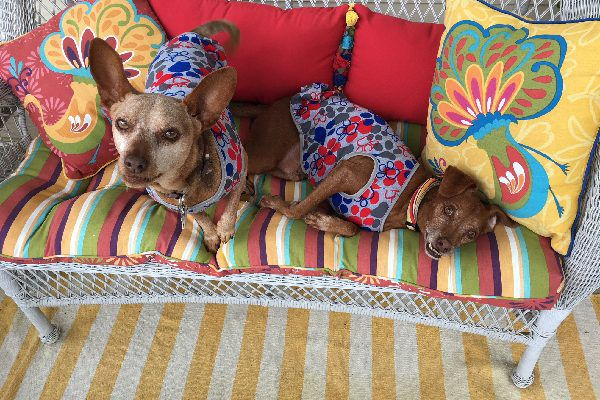 Two dogs on a summery outdoor couch.