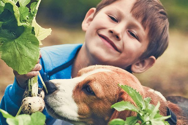 Boy gardening with his beagle.