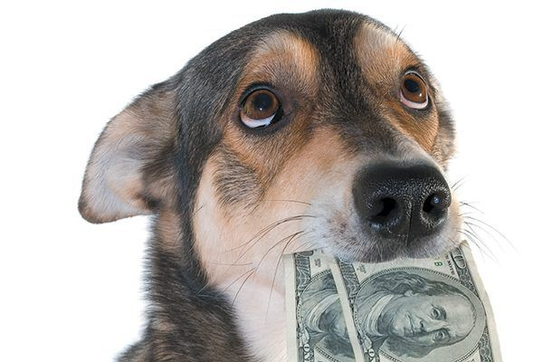 Dog with his hears back, holding two hundred dollar bills in his mouth.
