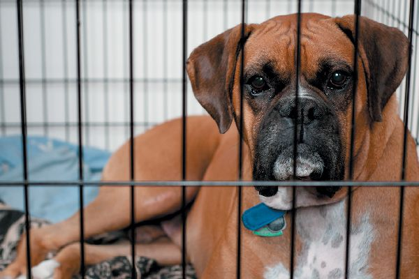Sad dog in a cage or shelter. Photography ©anitapeeples.com | Getty Images.