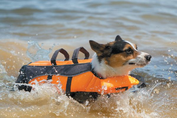 A dog swimming in water in a life vest.