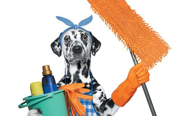 We tell you some DIY cleaning solutions that are safe for your dog. Photography ©BilevichOlga | Getty Images.