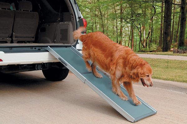 The Deluxe Telescoping Pet Ramp helps dogs get into a car. Photography ©Courtesy PetSafe.