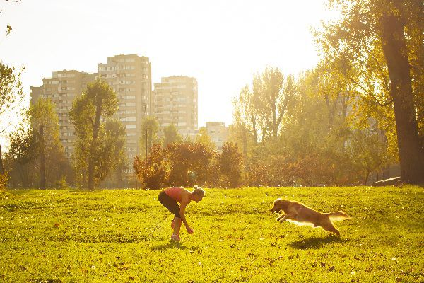 A dog running and playing outside with his human.