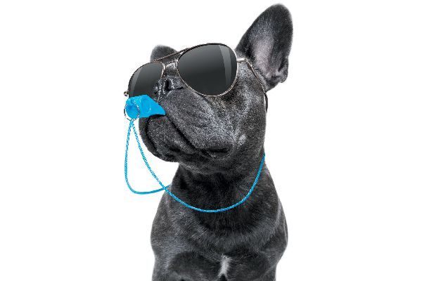 Dog with sunglasses on and a whistle in his mouth.
