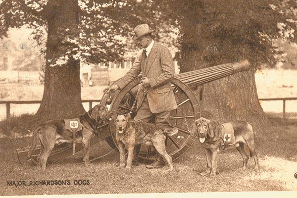 Col. Edwin Richardson's specially trained dogs served alongside British troops during the World Wars. Photography ©Amoret Tanner | Alamy Stock Photo.