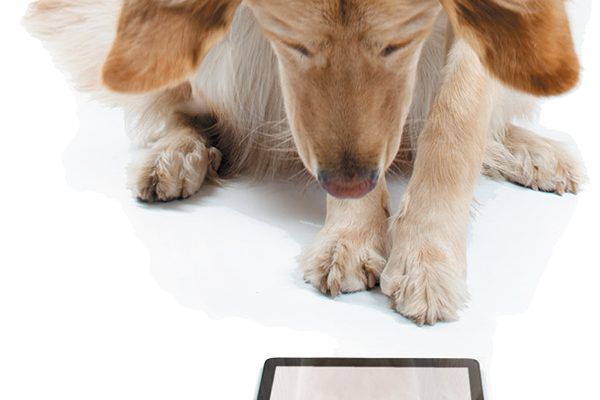 Can dogs maintain sharper minds if they frequently use their brains to problem solve? Photography ©Indeed | Getty Images.