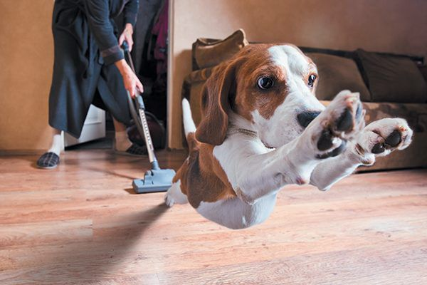 What are dogs scared of? The vacuum cleaner makes the list. Photography ©igorr1 | Getty Images.