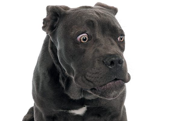 What are dogs scared of and how can we help them? Photography ©GlobalP | Getty Images.