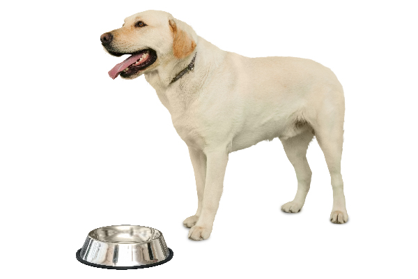 A dog with an empty food or water bowl.