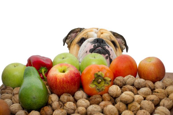 Dog surrounded by apples, nuts, avocados, peppers, etc.