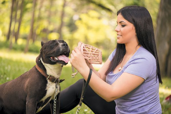 A woman putting a basket muzzle on her dog.