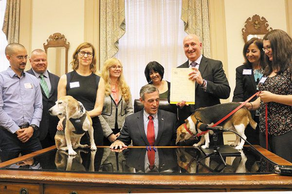 Delaware is now the eighth state to pass the Beagle Freedom Bill. Photography Courtesy Rescue + Freedom Project.