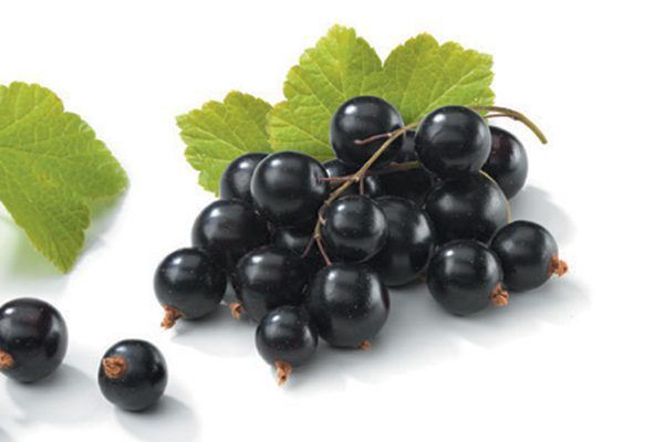 Black currant is packed with healthy antioxidants and phytochemicals. Photography GLA stands for gamma-linolenic acid, an omega-6 fatty acid. Photography ©GlobalP | Getty Images.