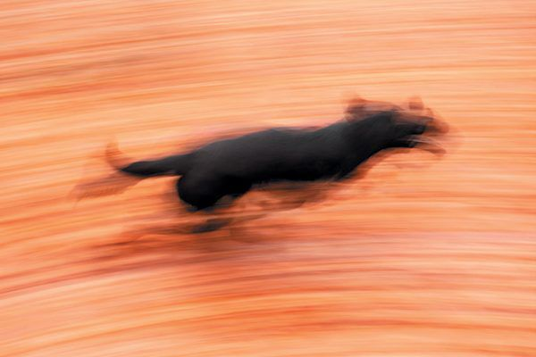 Your dog might have the zoomies because she needs to roam free after being kept in. Photography ©Maciej Bledowski | Getty Images.