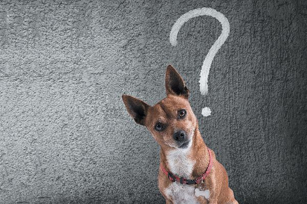A confused dog with a question mark over his head.