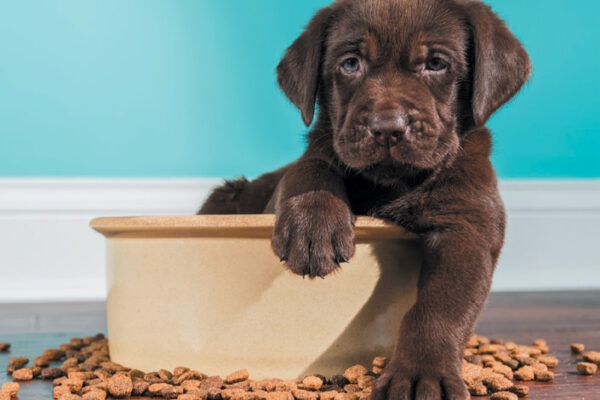 A nutritional diet is important based on your puppy's needs. Photography ©cmannphoto | Getty Images.