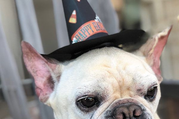 The perfect DIY hat to make for your dog this Halloween.