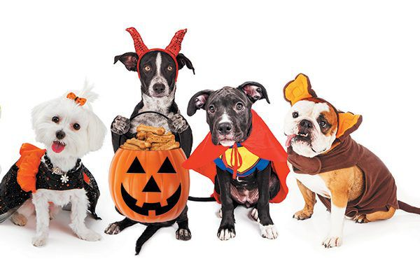 Here's how to make the most of dog Halloween costumes and the holiday itself. Photography ©adogslifephoto | Getty Images.