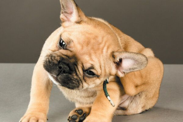 Inform yourself about puppy diseases and conditions in order to keep your puppy safe. Photography ©goldyrocks | Getty Images.