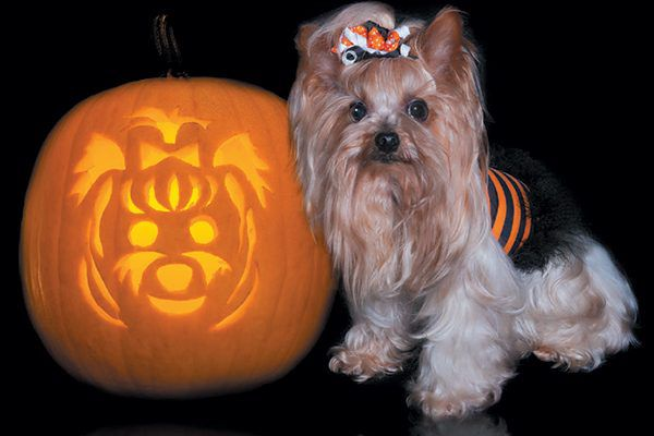 Find a breed-specific stencil for your pumpkin. Photography ©Missing35mm   Getty Images.