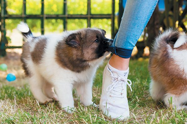 Puppies repeat behaviors that work for them. Photography ©chris-mueller | Getty Images.