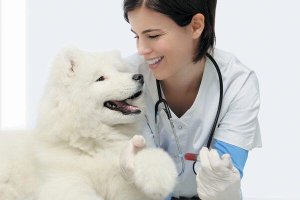 We size up the benefits and potential side effects of common canine vaccinations and medications. Photography ©Visivasnc | Getty Images.