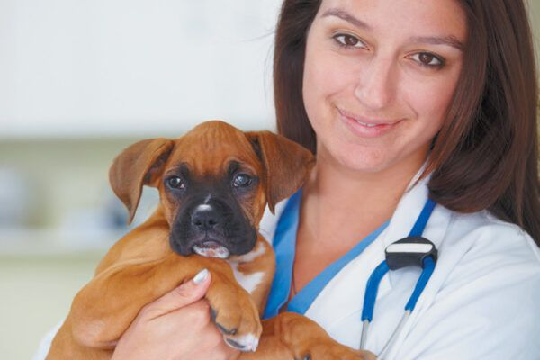 Discuss with your veterinarian which vaccinations for dogs are required by law in your state. Photography ©PeopleImages | Getty Images.