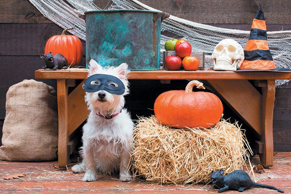 Stock you canine Halloween party with treats for pups. Photography ©peanut_roaster   Getty Images.