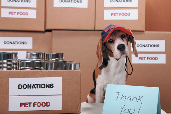 You can help your community give back to dogs and people in need. Photography ©Sadeugra | Getty Images.