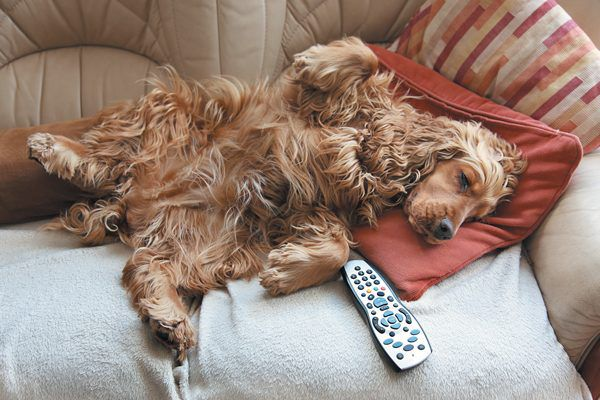 You love your pup but not the stench he leaves in the house. Photography ©uplifted | Getty Images.