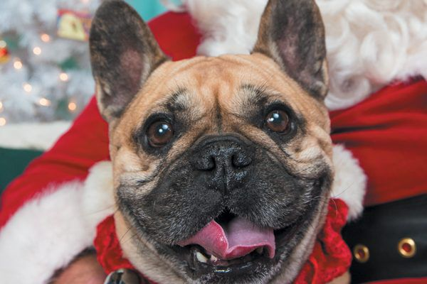 Your dog would love to meet Santa. Photography ©Mark Rogers Photography.
