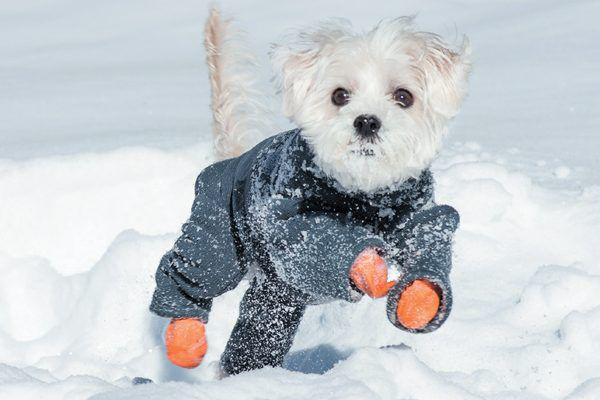 Do you have a snow puppy? Take a video of him playing in the snow. Photography ©DavidClarine Getty Images.