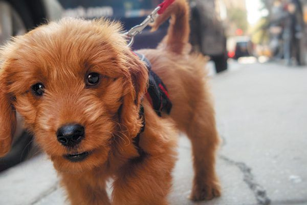 Make sure to bring your puppy somewhere that isn't too crowded or noisy. Photography ©nycshooter | Getty Images.