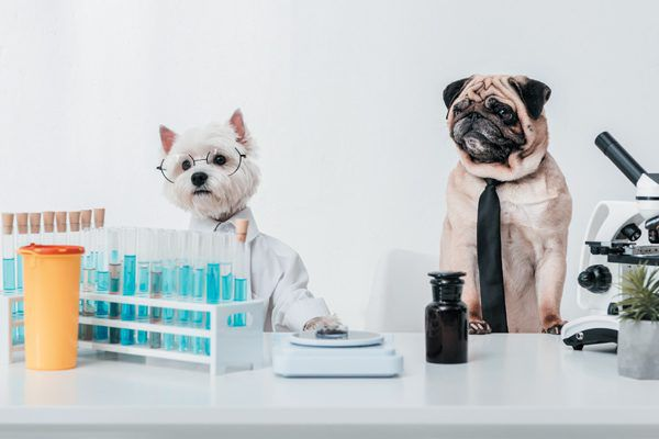 You dog may be eligible to participate in clinical trials to help with research. Photography ©LightFieldStudios | Getty Images.