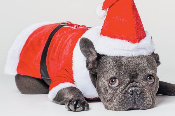 A dog in a Santa outfit.
