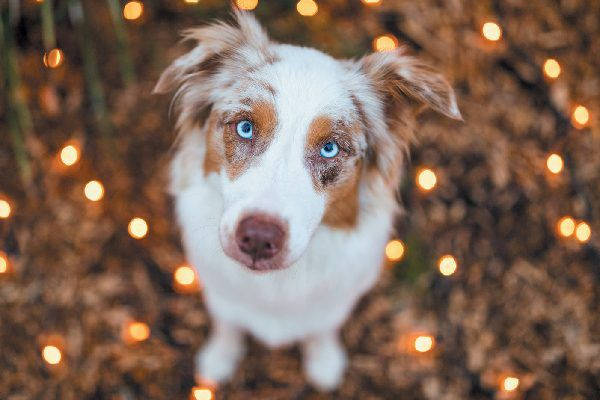 A dog looking up innocently, surrounded by lights.